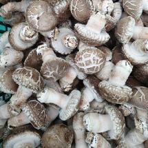 [경주청운농장] 생표고버섯 1kg