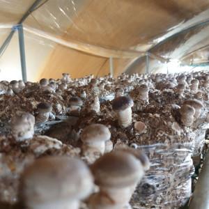 [미소버섯농원] 표고버섯 1kg